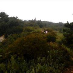 嵩北森林公園用戶圖片