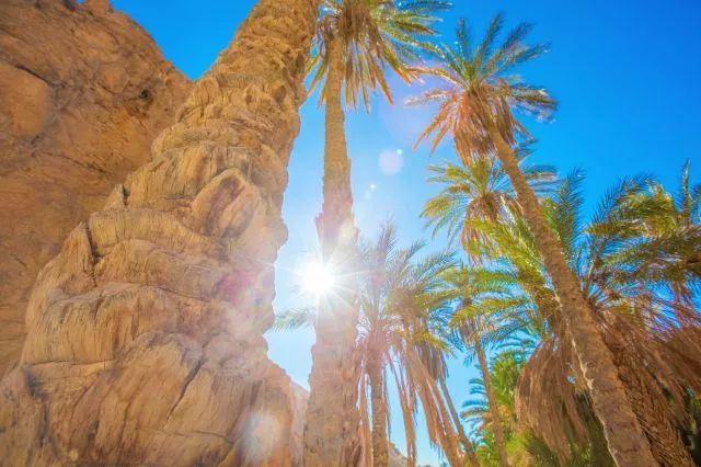 免簽突尼西亞,左手地中海、右手撒哈拉的夢幻之地!