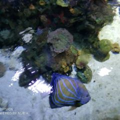 吉隆坡城中城水族館用戶圖片