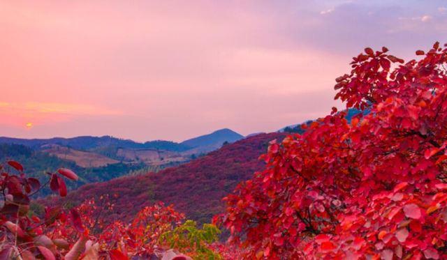 河南金秋宛如油畫,層林盡染的美景錯過再等一年!