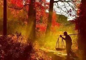 藏在臨安山野美景祕境中的野奢帳篷民宿,酷似一副色彩絢麗的油畫丨慕仁·太陽谷·拾伍間