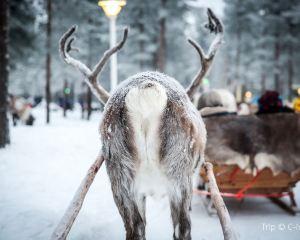 Rovaniemi: Santa's Home on the Arctic Circle
