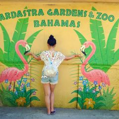 Ardastra Gardens, Zoo and Conservation Center User Photo