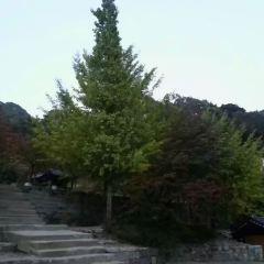 清平寺用戶圖片