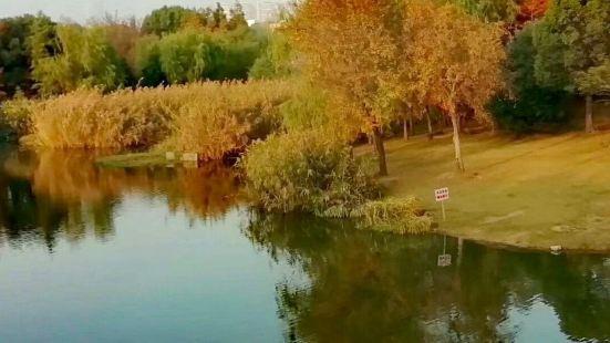 金城湾公園