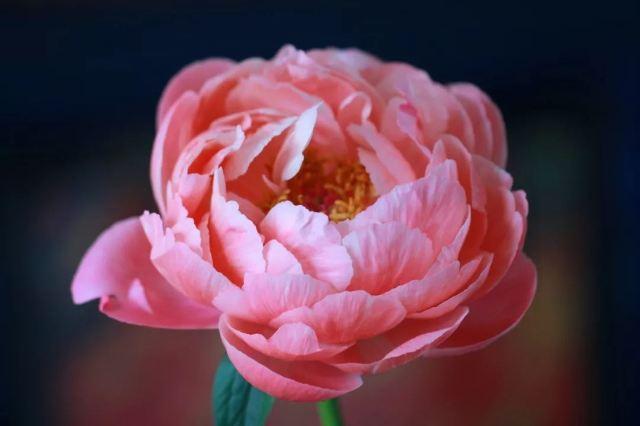 今春必去的7個超美花展!前6個都免費!