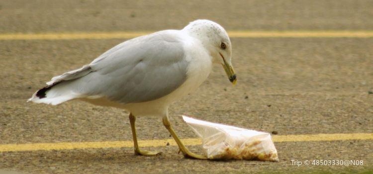 海鷗的停車場3