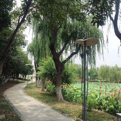 Lotus Park User Photo