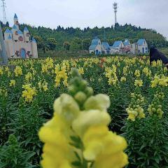 原香國際香草園用戶圖片
