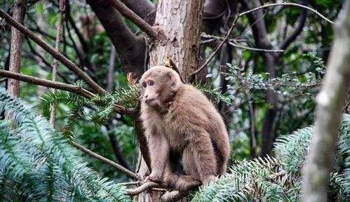 Huangshan Fuxi Wild Monkey Valley