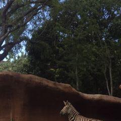 火奴魯魯動物園用戶圖片