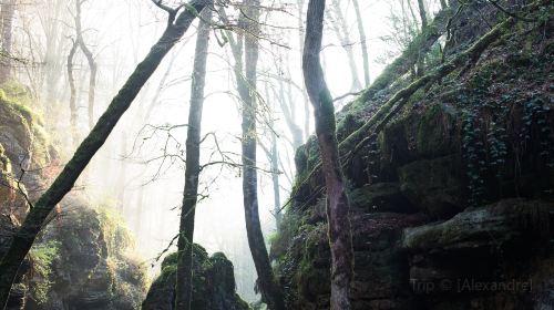 Waldbillig