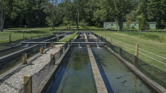 Sandwich Fish Hatchery