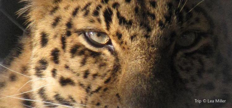 阿西尼博因公園動物園3