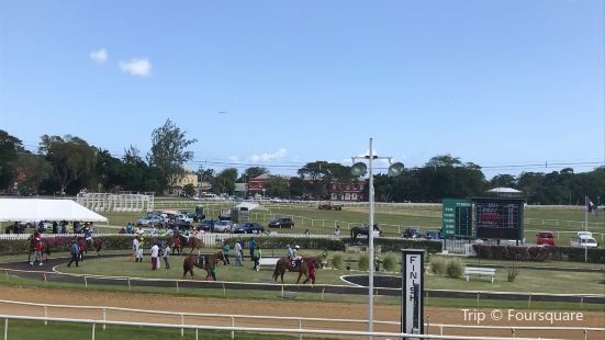 Garrison Savannah - Barbados Turf Club
