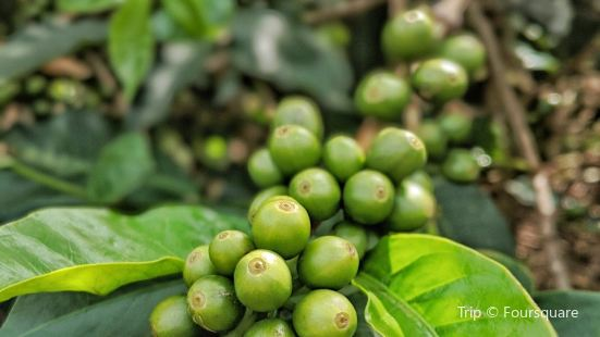 Huye Mountain Coffee