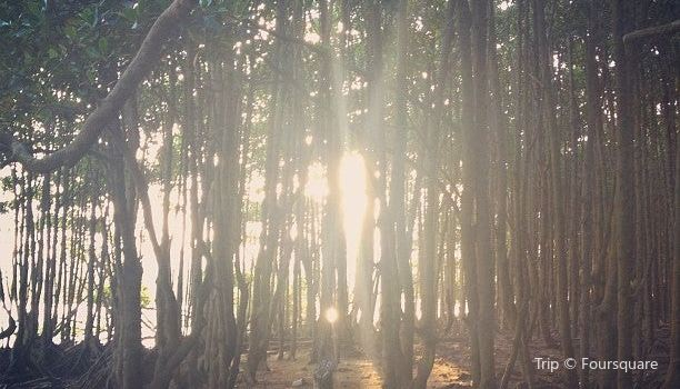 Beachwood Mangroves Nature Reserve2