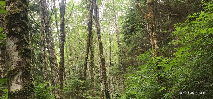 Ketchikan Rainbird Trail1