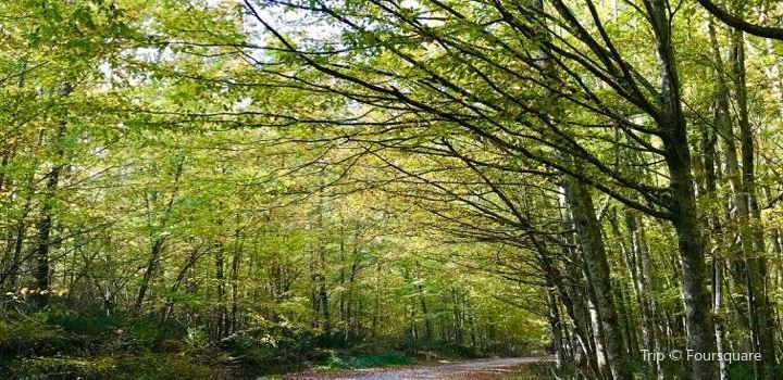 Igneada Longoz Ormanları Milli Parkı2