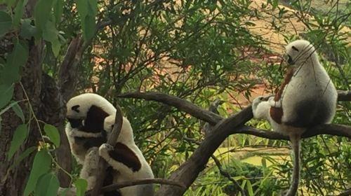 Lemurs' Park