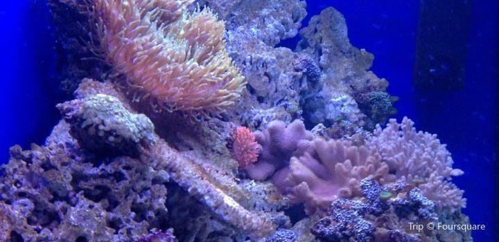 Aquarium Terrarium Sibenik3