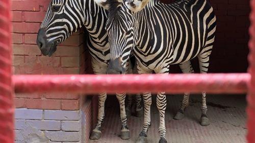 Chittagong Zoo