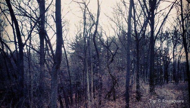 Nichols Arboretum2