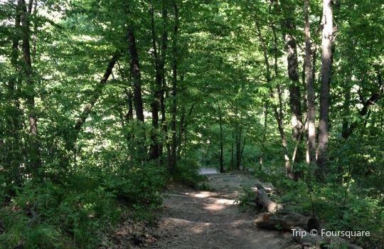 Nichols Arboretum1