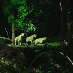 Night Safari User Photo