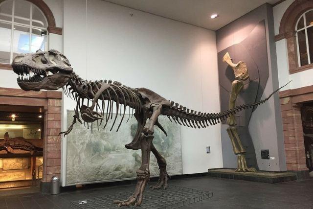 森肯伯格自然歷史博物館