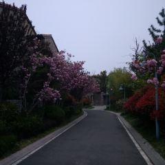 Baden Village User Photo