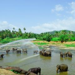 品納維拉大象孤兒院用戶圖片