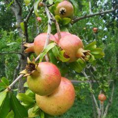 Grape Juice Factory, Budogaoka Information Center User Photo