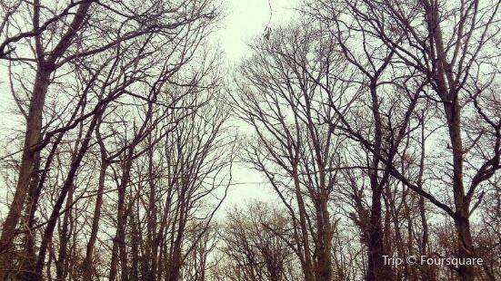 Branches et Loisirs