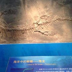 랴오닝 고생물 박물관 여행 사진