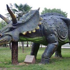 Dinosaur Park User Photo