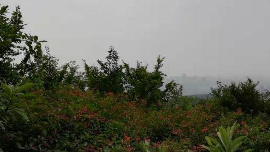 白雲山山水豆花