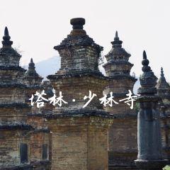 少林寺用戶圖片
