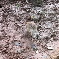 碧峰峽野生動物園用戶圖片