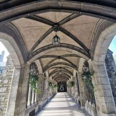 多倫多大學用戶圖片