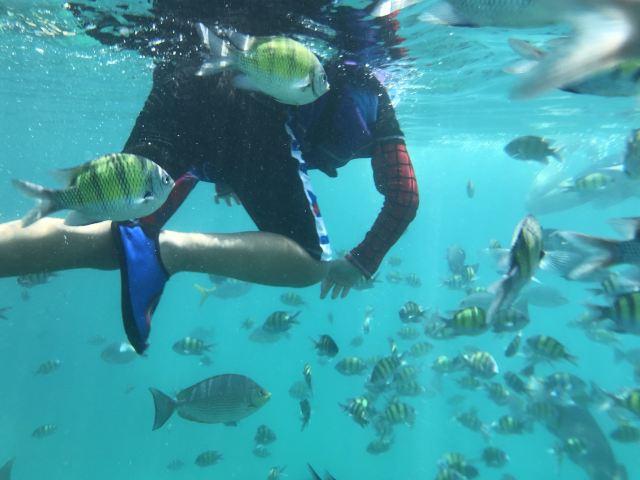 芭雅島潛水