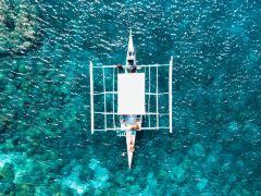 4日宿务+薄荷岛·追海豚鲸鲨共舞+迷失沙丁鱼风暴