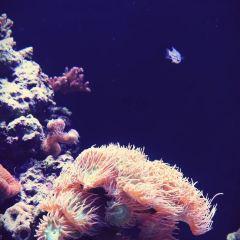 聖地牙哥海洋世界用戶圖片
