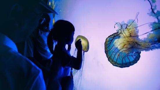 상하이 해양수족관