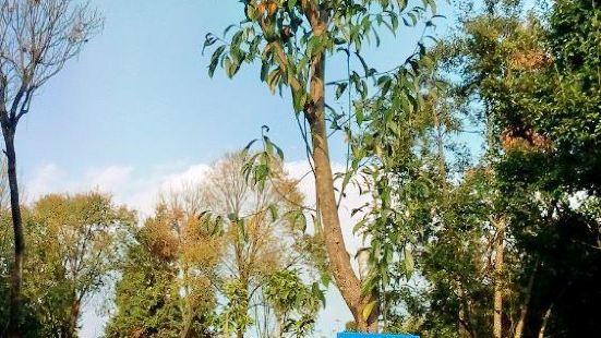 高黎貢山植物園