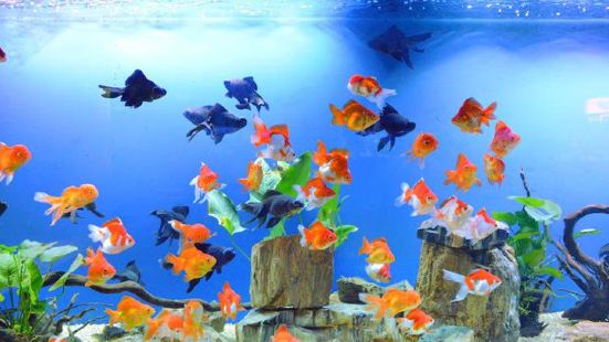 Lemin Sea World