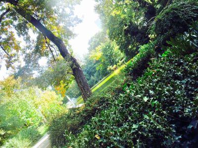 Nebbiensches花園