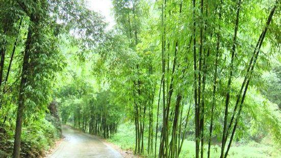 루거우(노구) 대나무숲