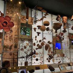 Prirodoslovni muzej Rijeka User Photo