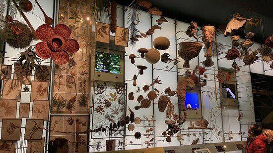 里耶卡自然歷史博物館